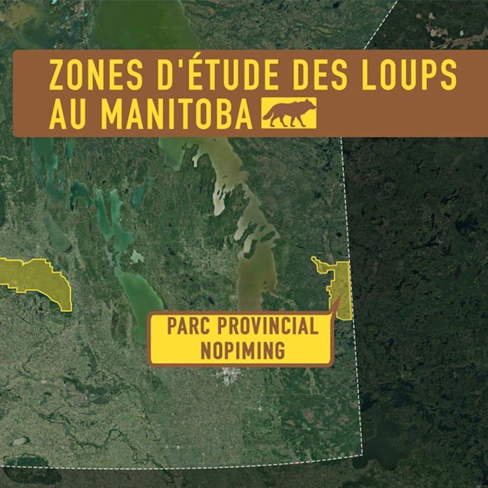 Zones d'étude des loups au Manitoba