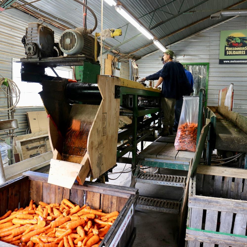 Une machine qui permet le tri des carottes