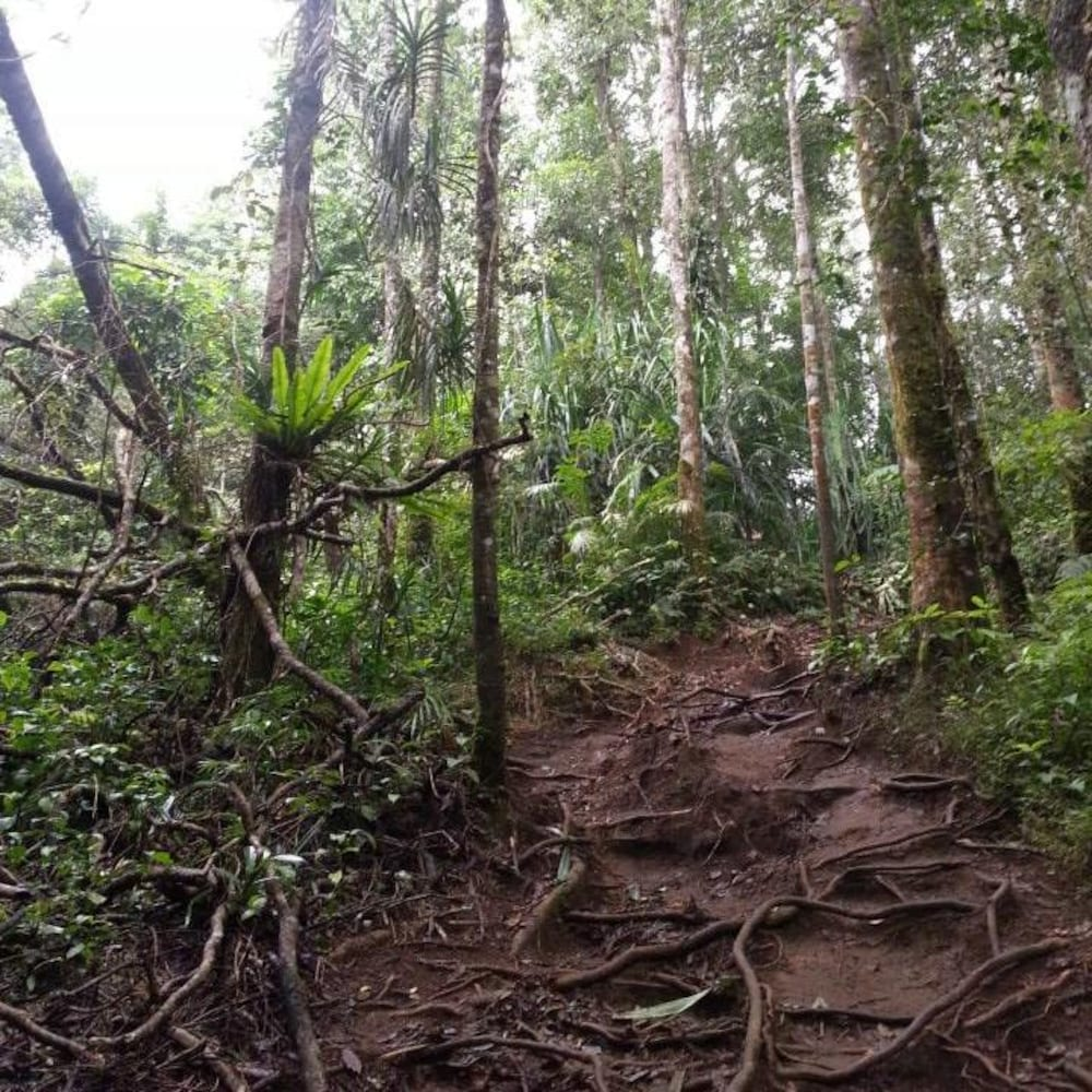 Chantier pédestre au milieu de la forêt tropicale.