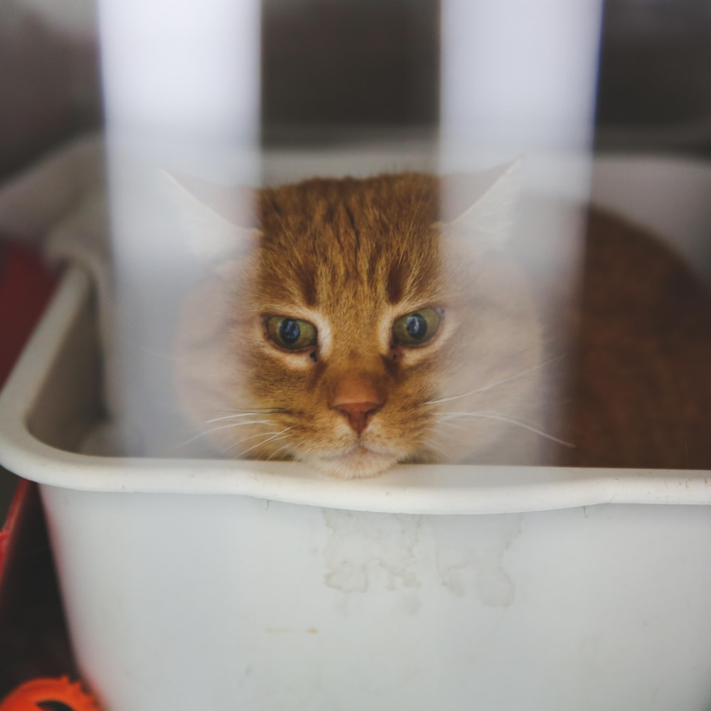 Le chat lance un regard perçant à travers les barreaux de sa cage.