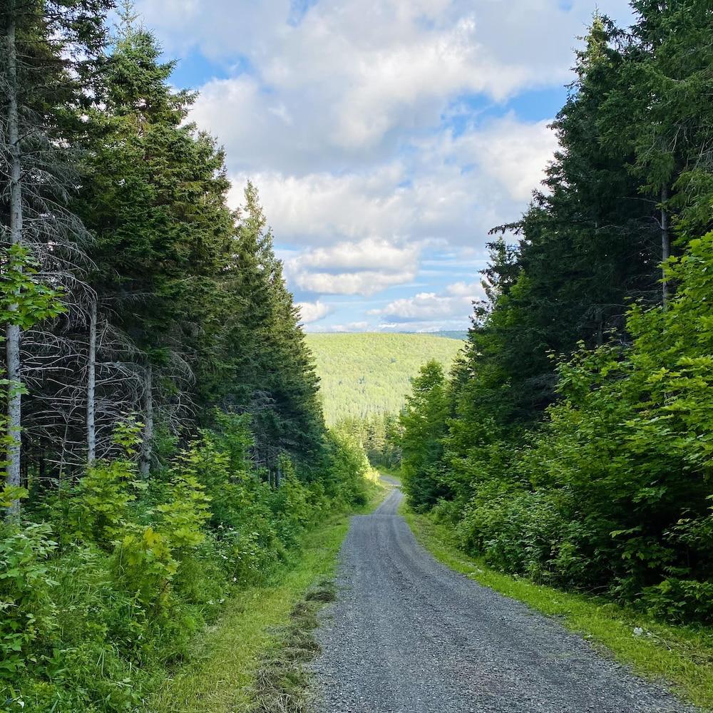 Un chemin qui sillonne une forêt.