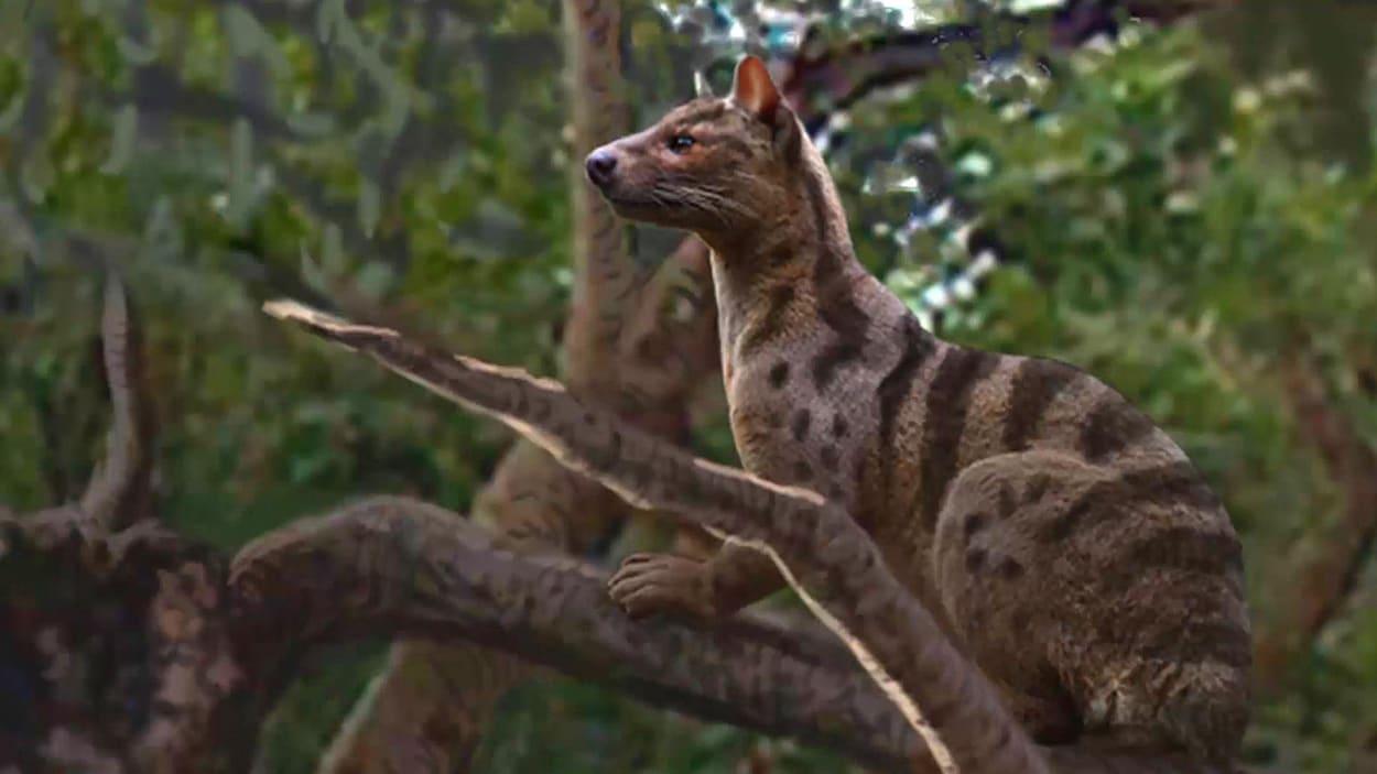 La bête avait à peu près la taille du lynx roux, qui vit actuellement en Amérique du Nord.