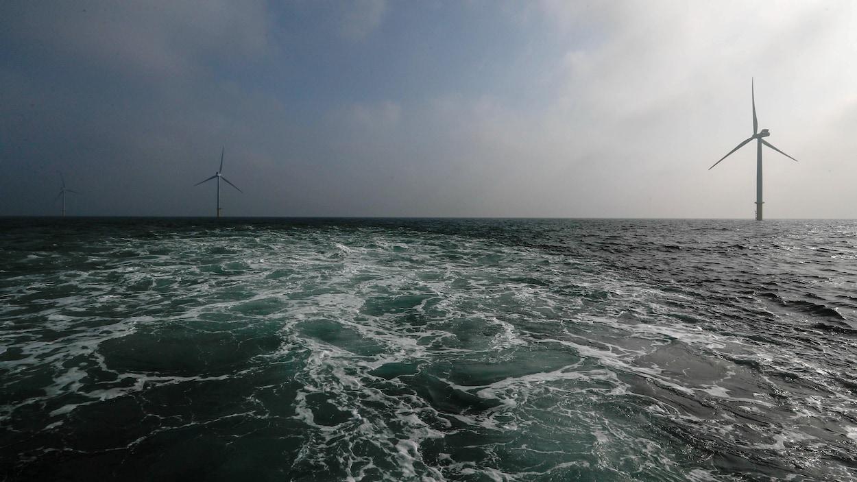 Des éoliennes près d'Amsterdam.