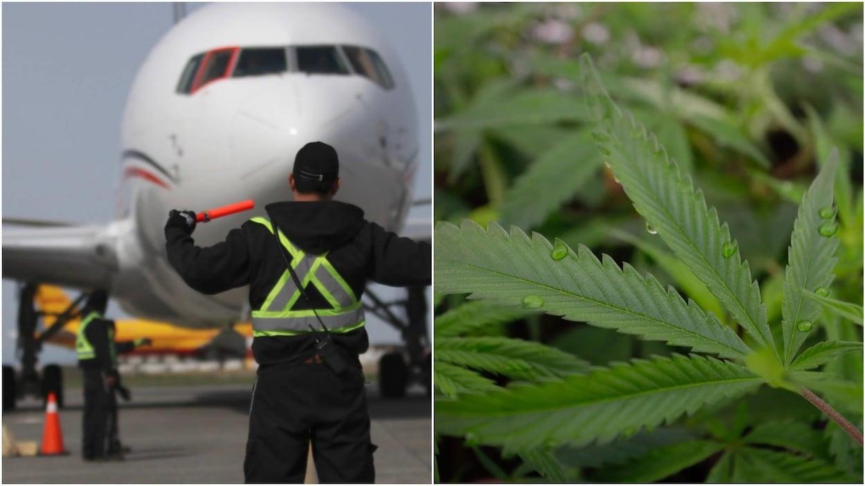 À gauche, un homme qui porte un gilet de haute visibilité donne la direction à un avion. À droite, une plante de majijuana en gros plan.