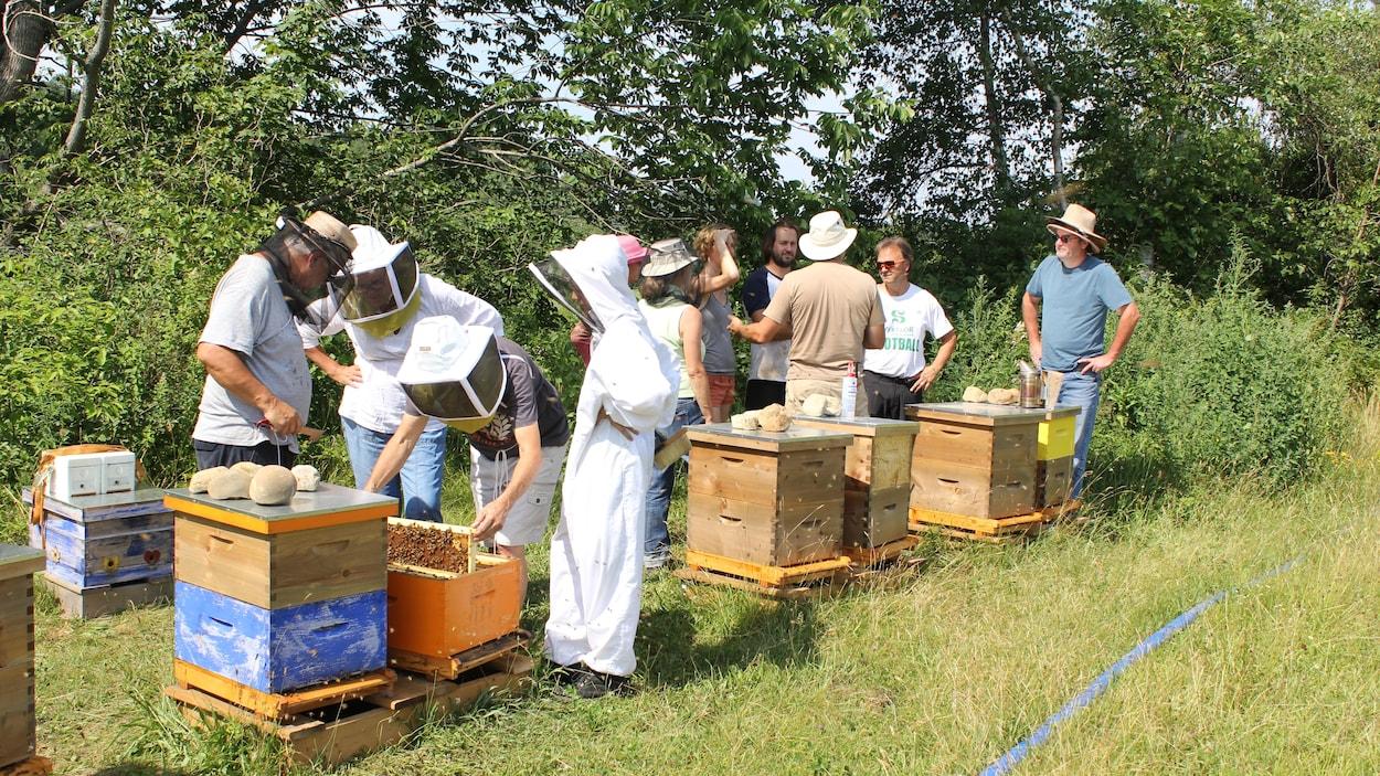 Une dizaine de personnes discutent ou manipulent les ruchers dans un champ à Bolton-Est.