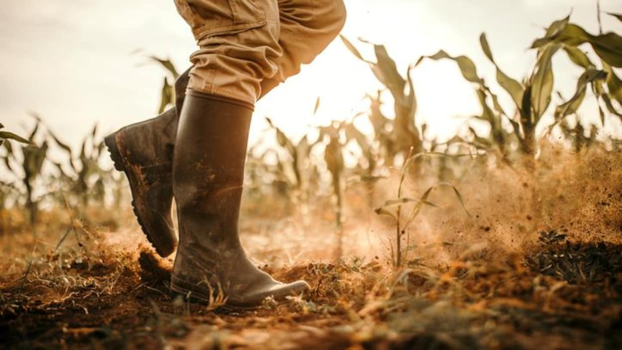 Les bottes d'un agriculteur.