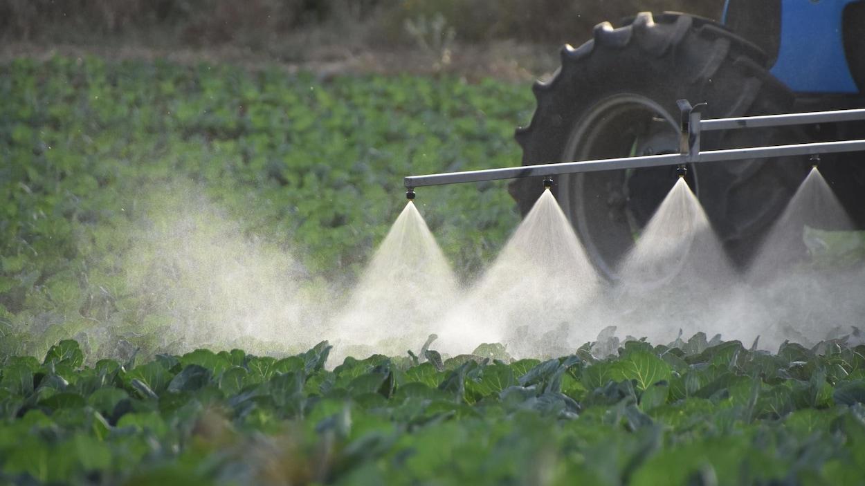 Un tracteur procède à l'arrosage d'un champ.