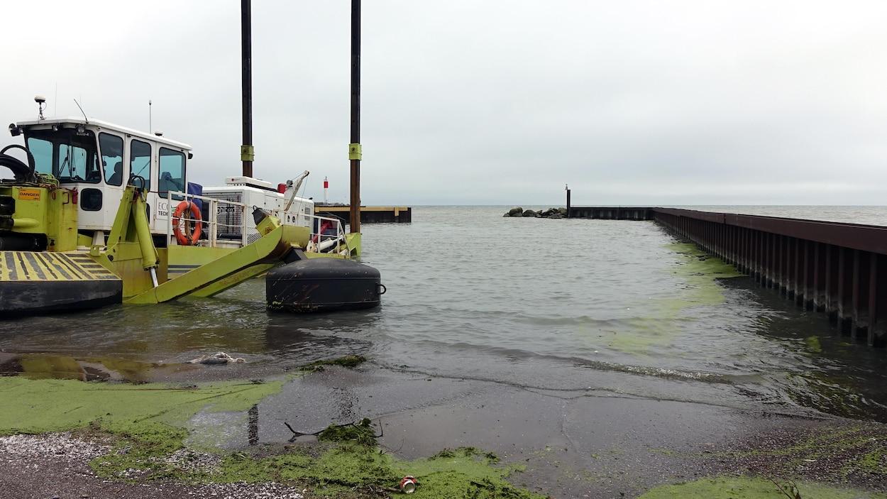 On voit des algues de couleur verte sur la rive du lac Érié. Plus loin, on voit un bateau à quai. Le ciel est nuageux.