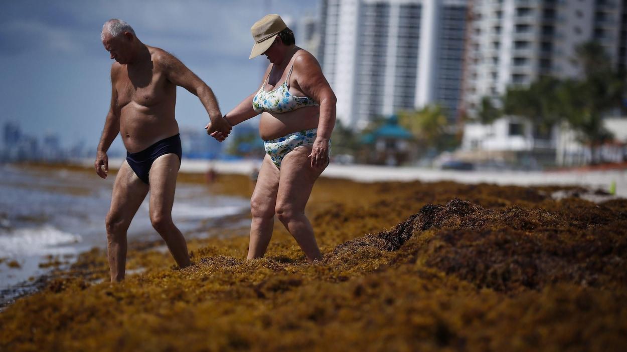 Des vacanciers font leur chemin à travers les algues pour atteindre l'eau.