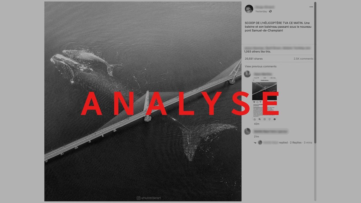 On voit deux baleines sous un pont et un statut Facebook qui mentionne que c'est le nouveau pont Samuel-De Champlain. Le mot « Analyse » est écrit sur la photo.