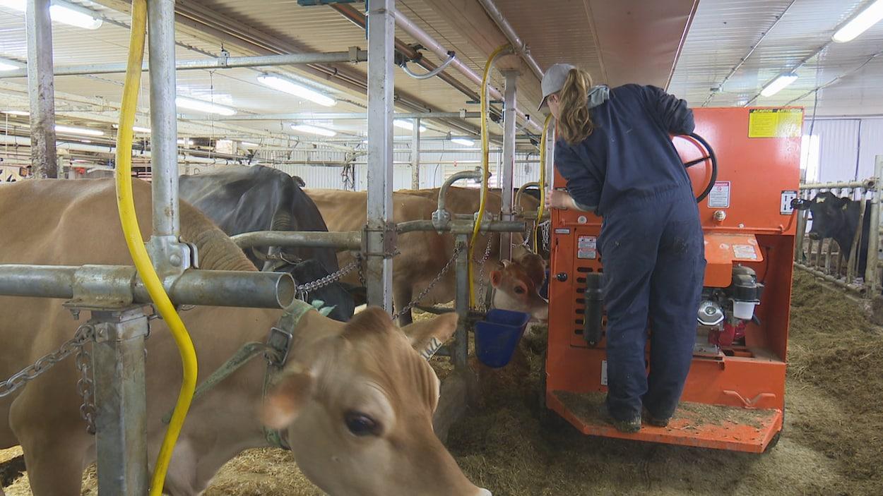 Enya De Carufel-Perron apprend le métier de producteur laitier sur une ferme de Saint-Gabriel-de-Rimouski.