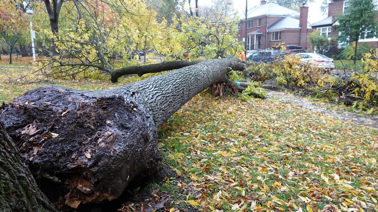 Pluie abondante et vents forts au Québec et dans les Maritimes