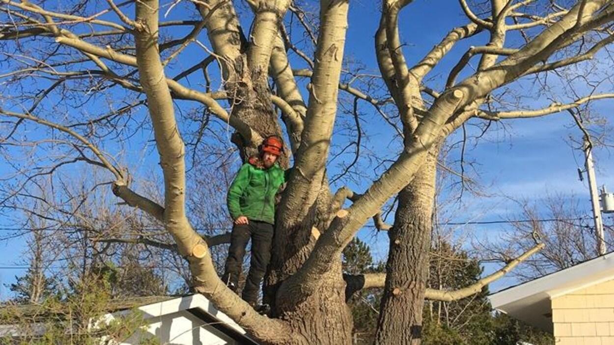 Un homme debout dans un arbre.