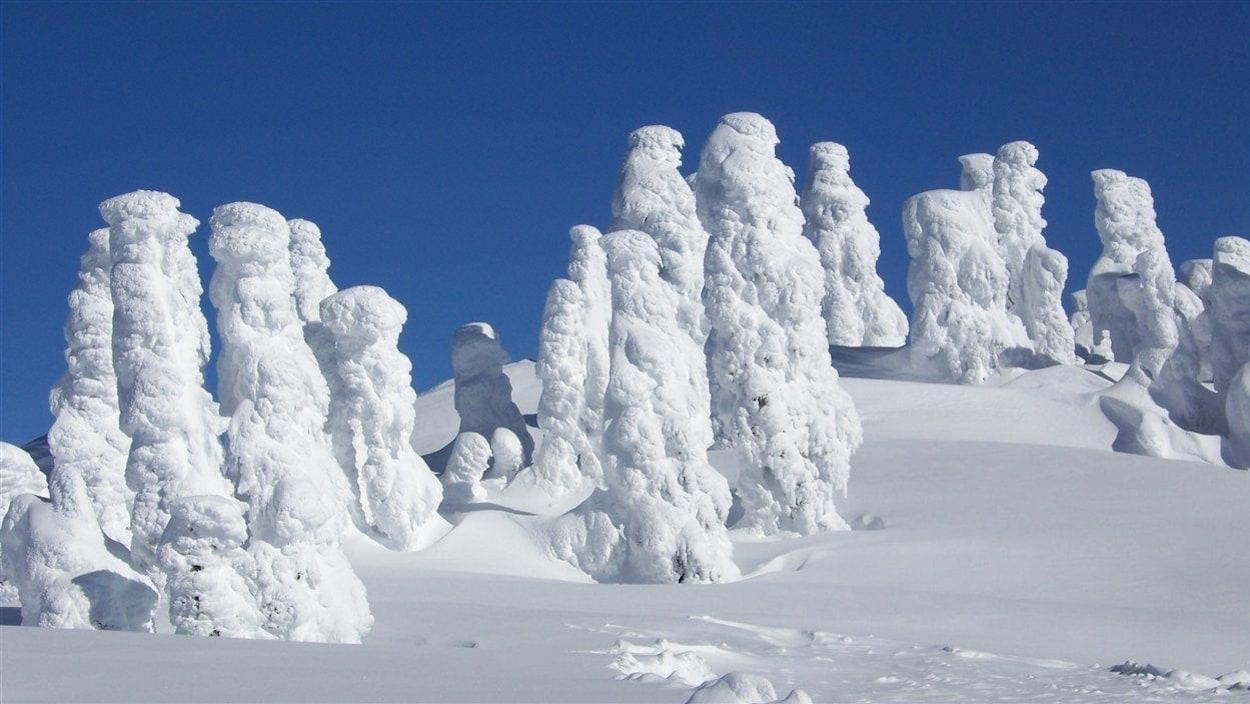 Des arbres couverts de neige à Cypress Mountain en Colombie-Britannique