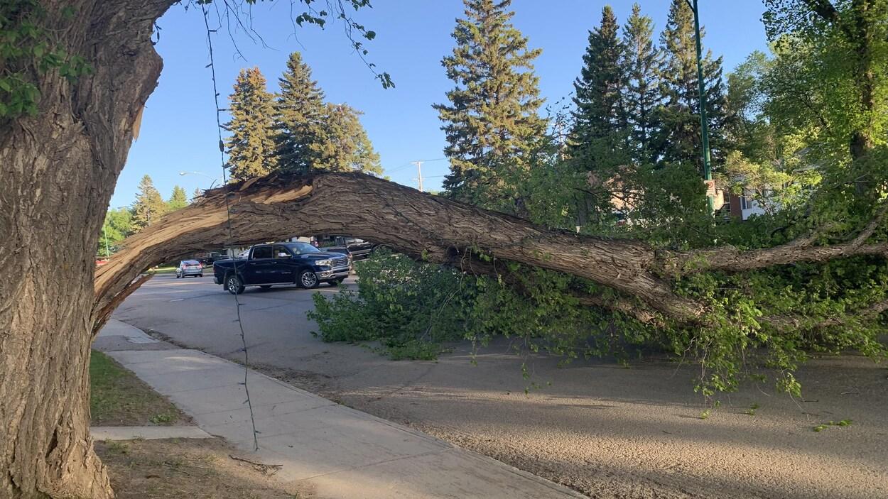 Un arbre sectionné bloque une rue.