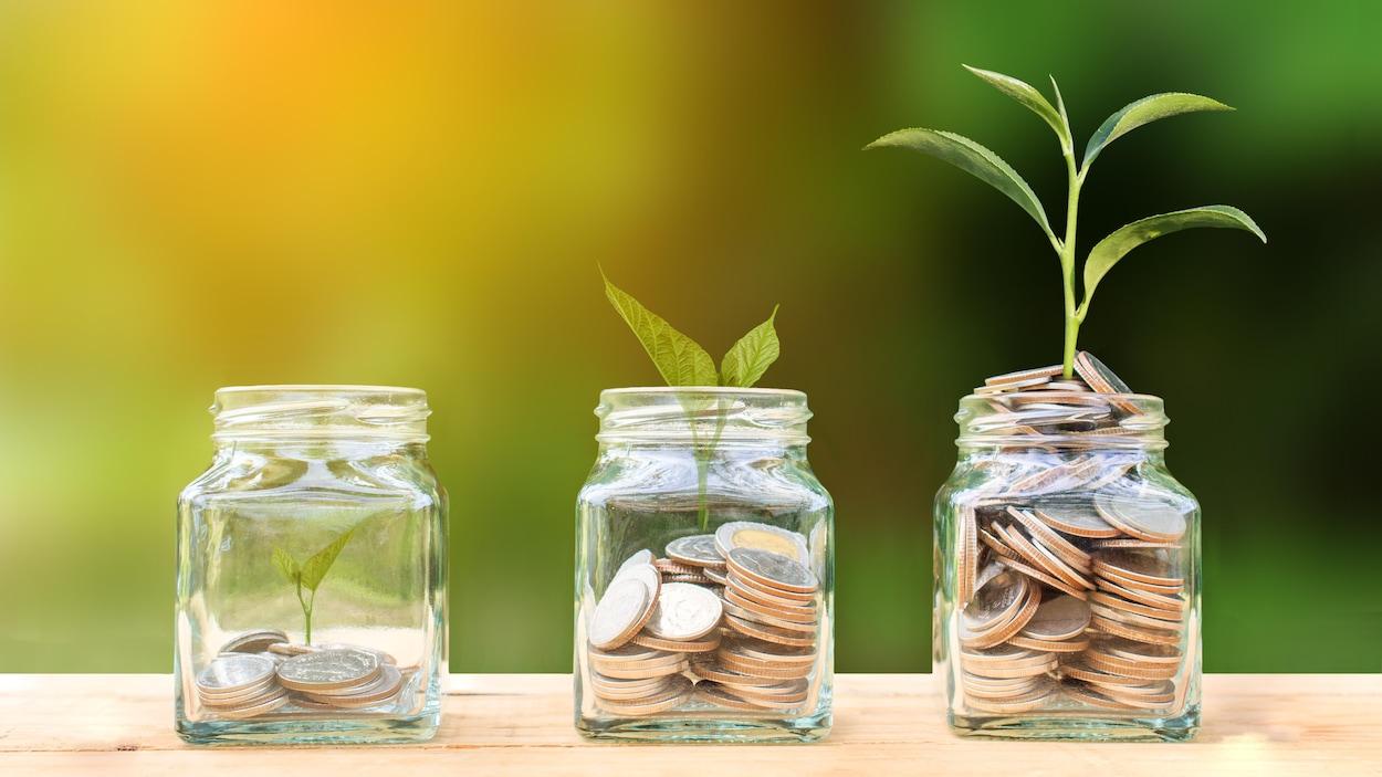 De dollars et des plantes sont mis dans des pots. Les plantes se trouvant dans les contenants ayant le plus d'argent ont le plus mûri.
