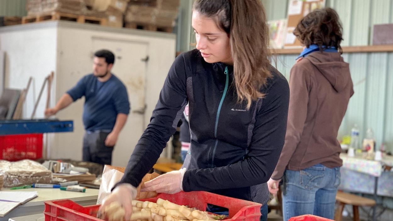 Une jeune femme place des asperges dans un bac de plastique.