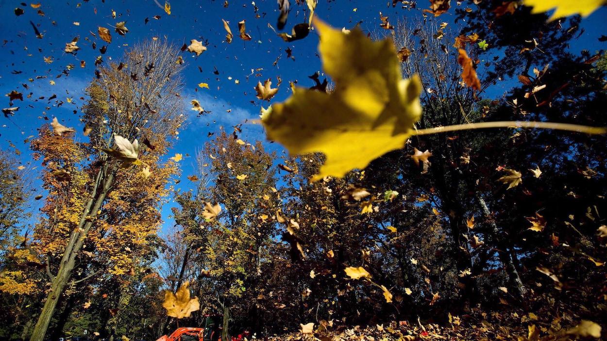 Des feuilles en automne.