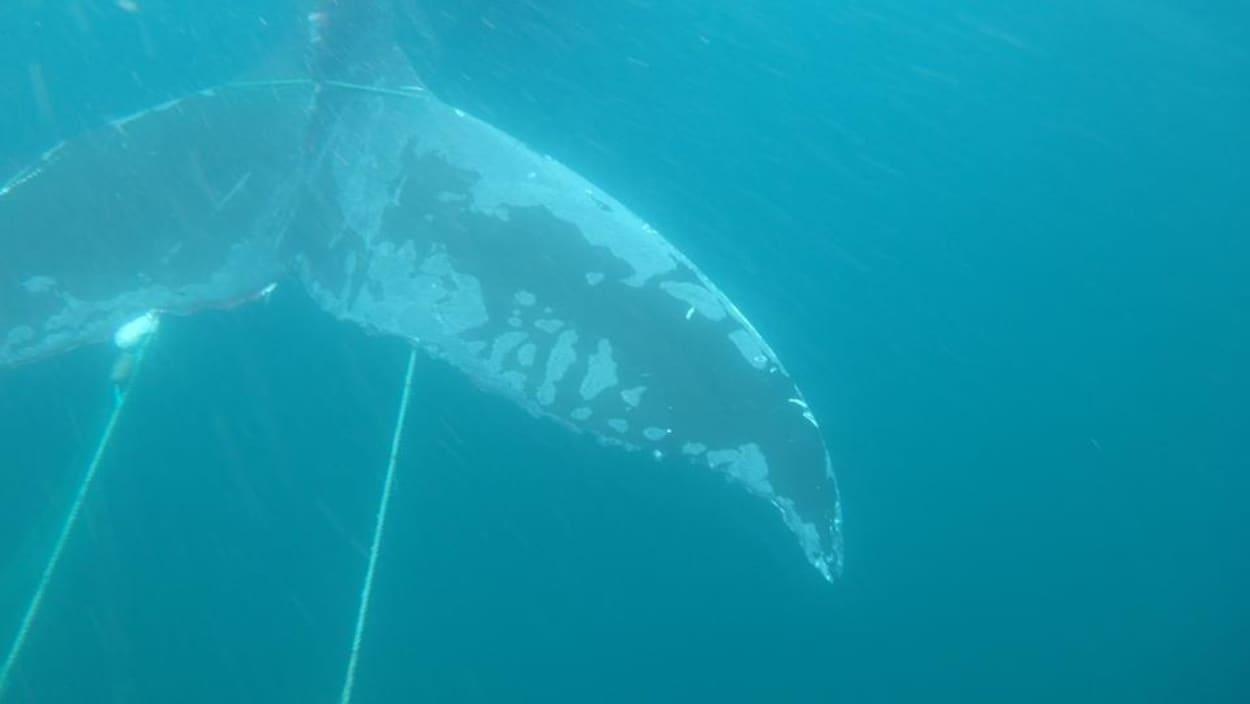Une queue de baleine dans de l'équipement de pêche