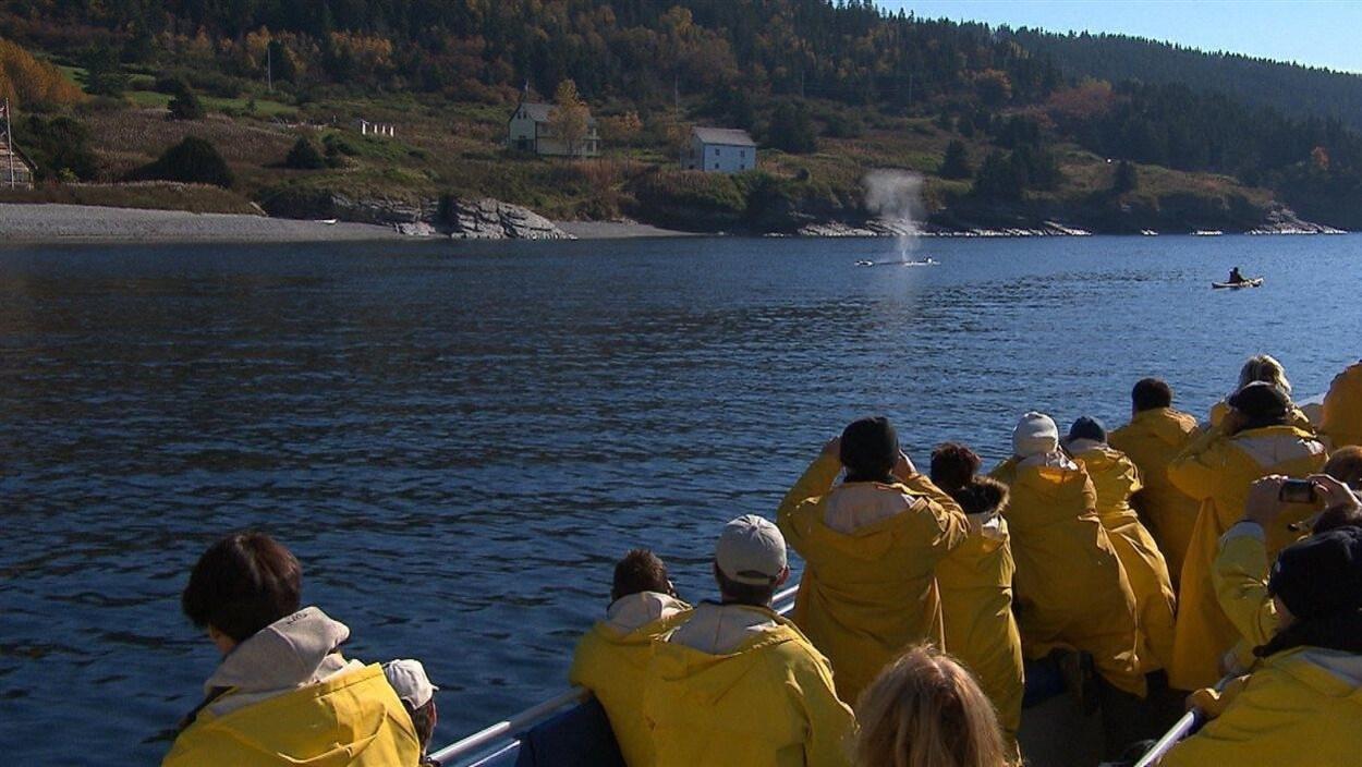 Des croisiéristes apprécient la présence des baleines dans la baie de Gaspé. forillon rorqual
