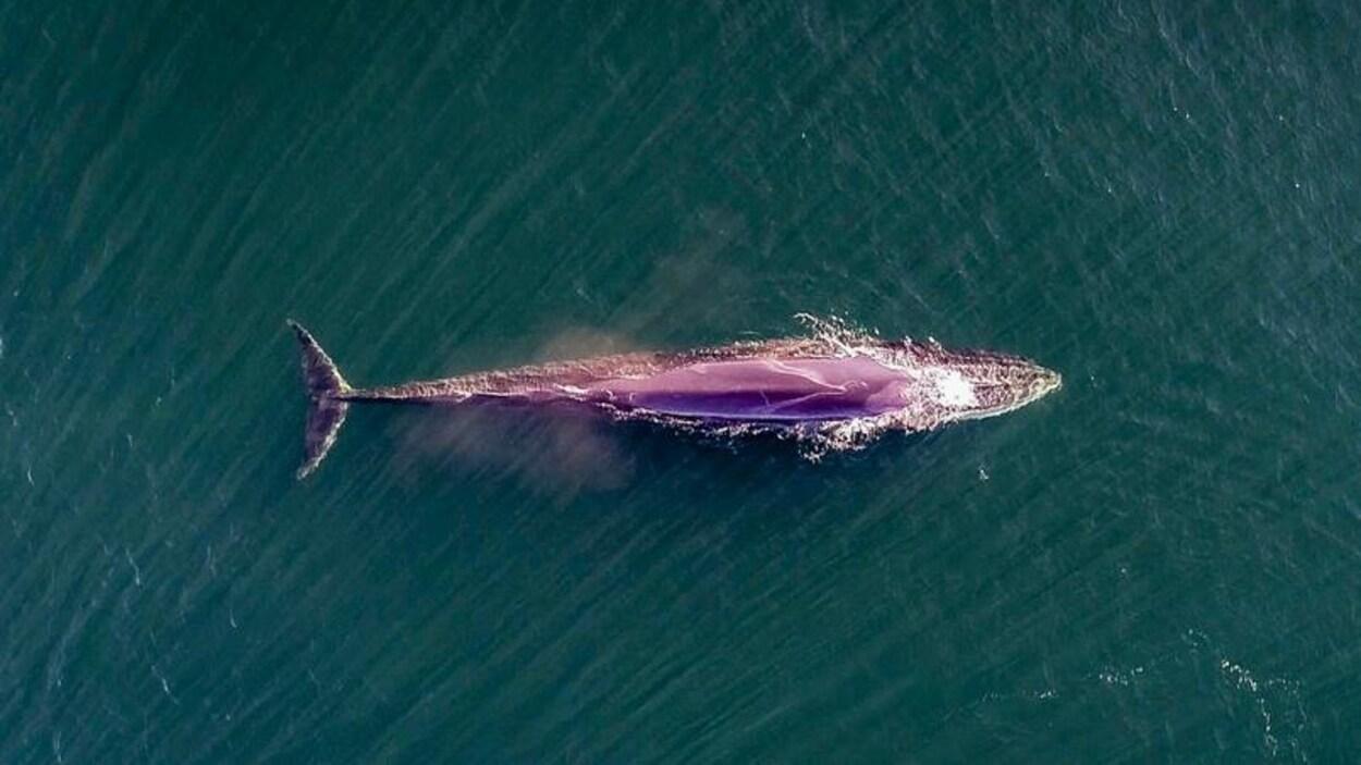 Une baleine vue des airs
