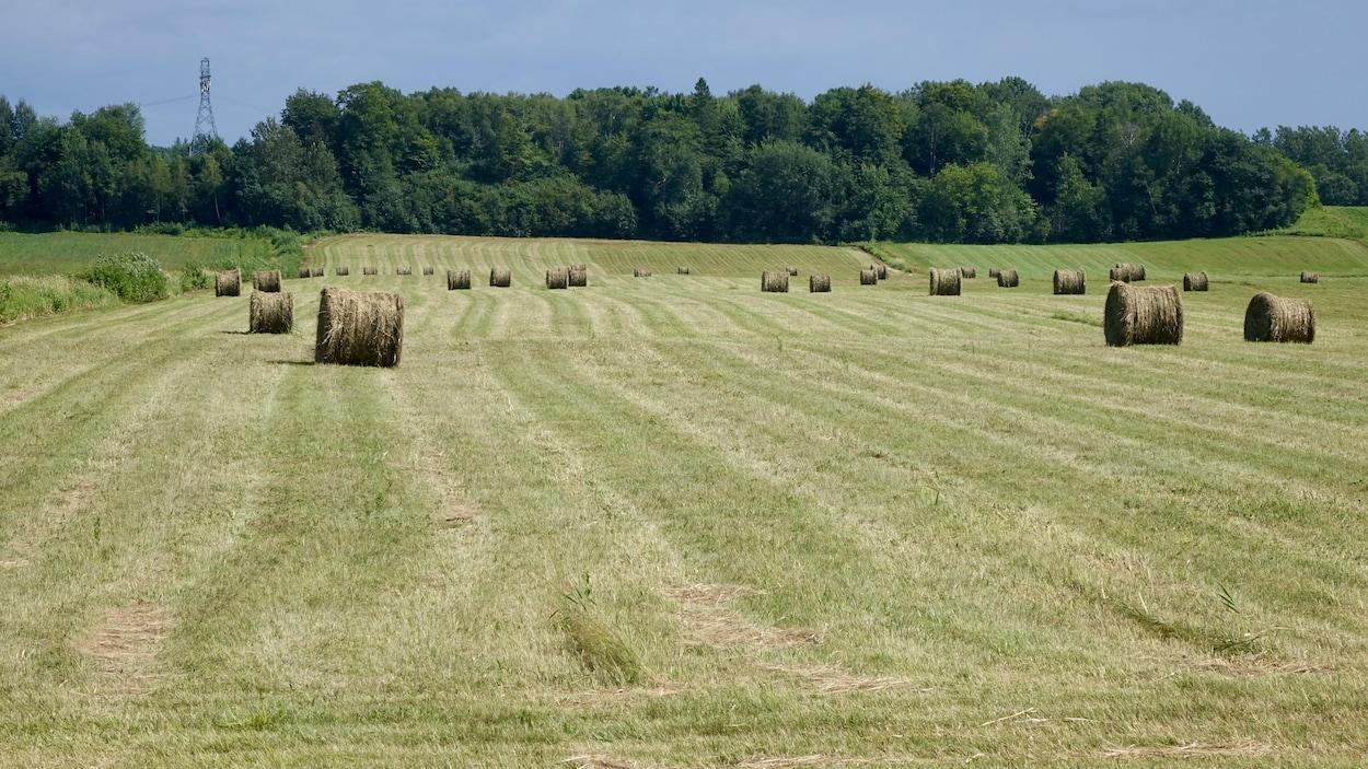 Des ballots de foin dans un grand champ.