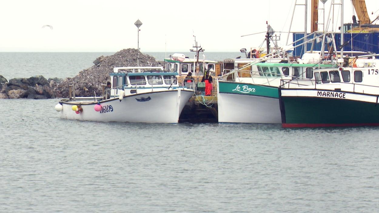 Des bateaux de pêche amarrés à un quai
