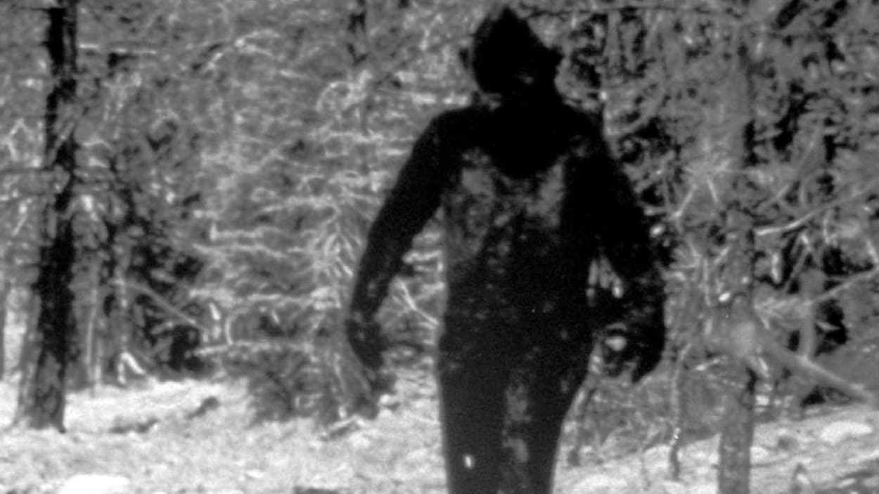 Une image qui montrerait un Sasquatch dans une forêt en Californie.
