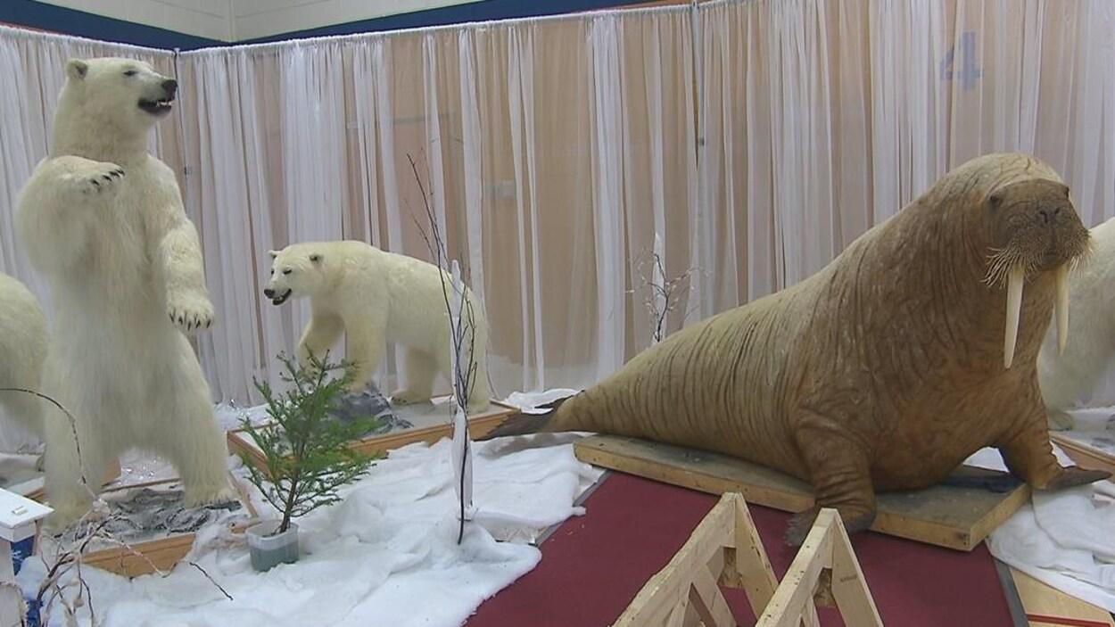 Des ours polaires et un morse