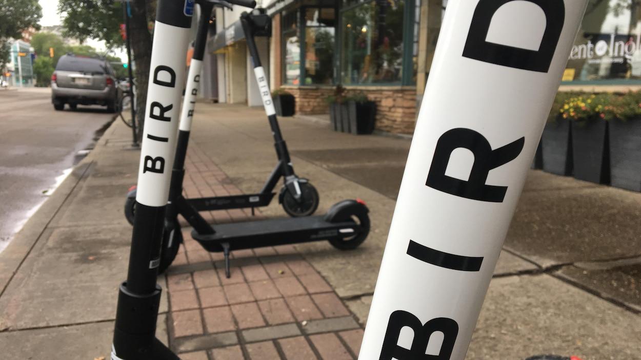 Des trottinettes électriques de l'entreprise Bird sur le trottoir, près de commerces.