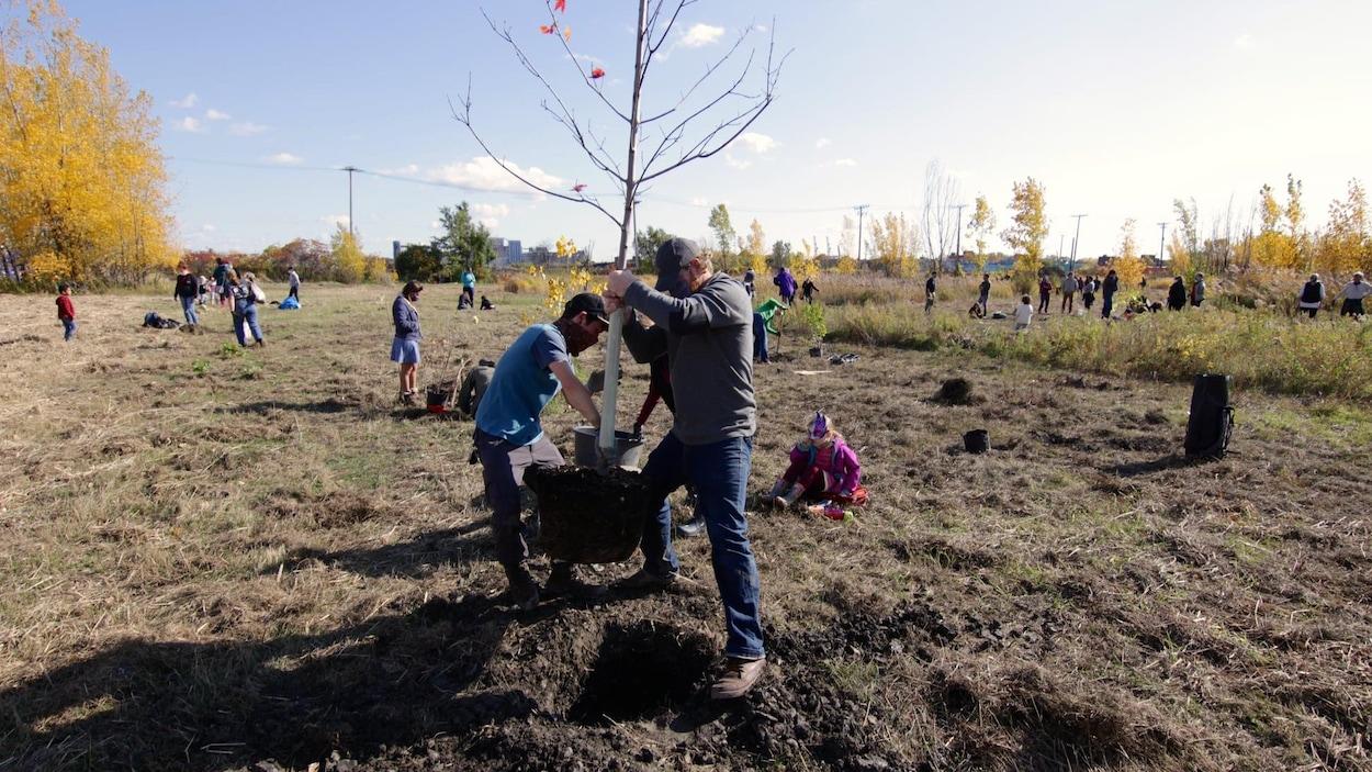 Des personnes sont éparpillées dans un terrain vague où elles plantent des arbres.