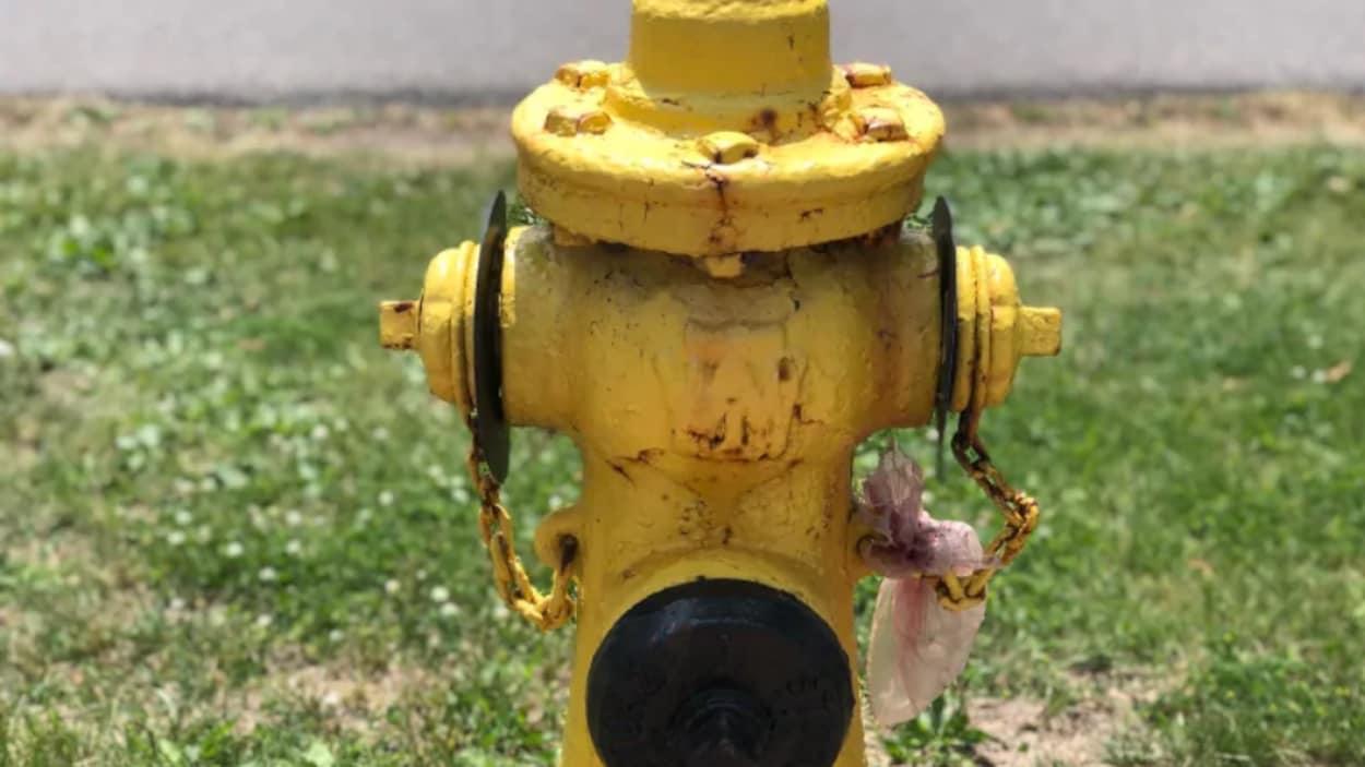 Une borne d'incendie jaune devant un parterre d'herbe.