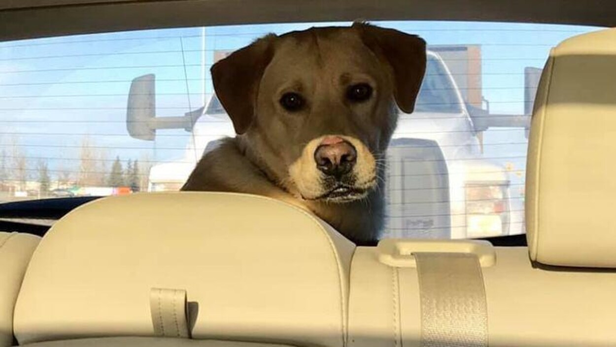Plan moyen de Bosco assis dans l'espace cargo derrière le siège arrière d'une voiture.