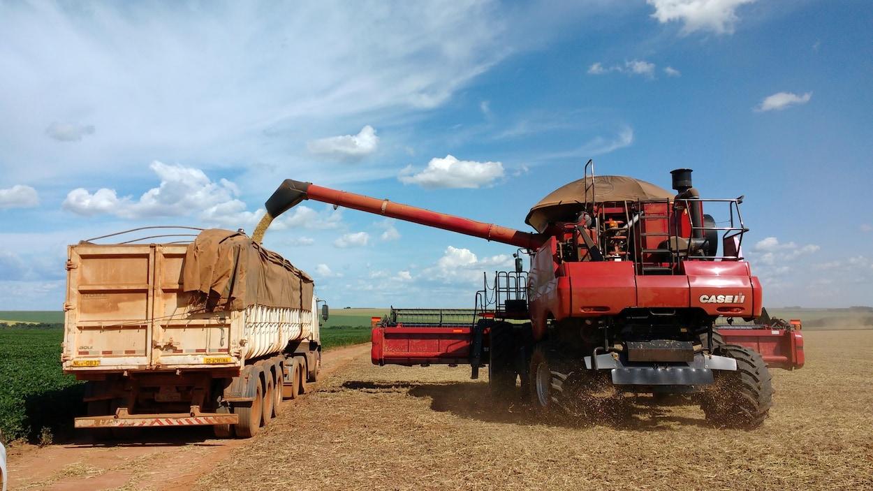 Des fèves de soya sont transvidées dans un camion à Campo Verde dans l'État de Mato Grosso au Brésil