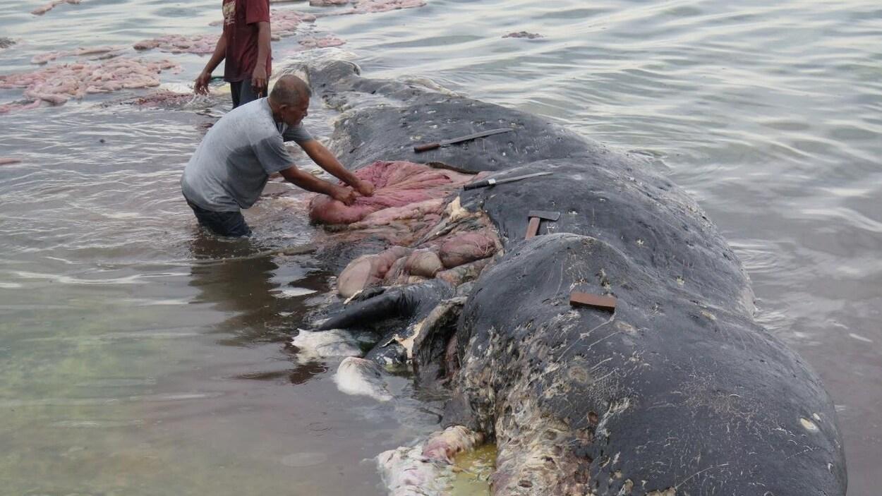 Six kilos de plastique retrouvés dans l'estomac d'une baleine échouée en Indonésie