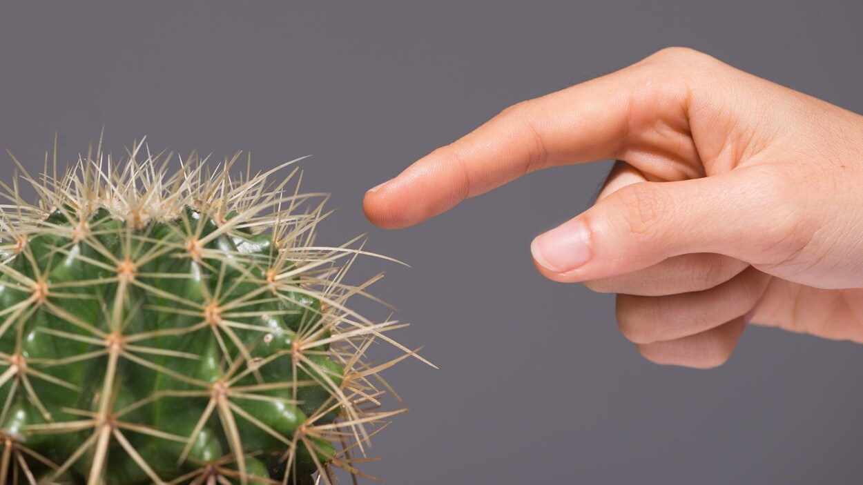 Une femme met le doigt sur une épine de cactus.