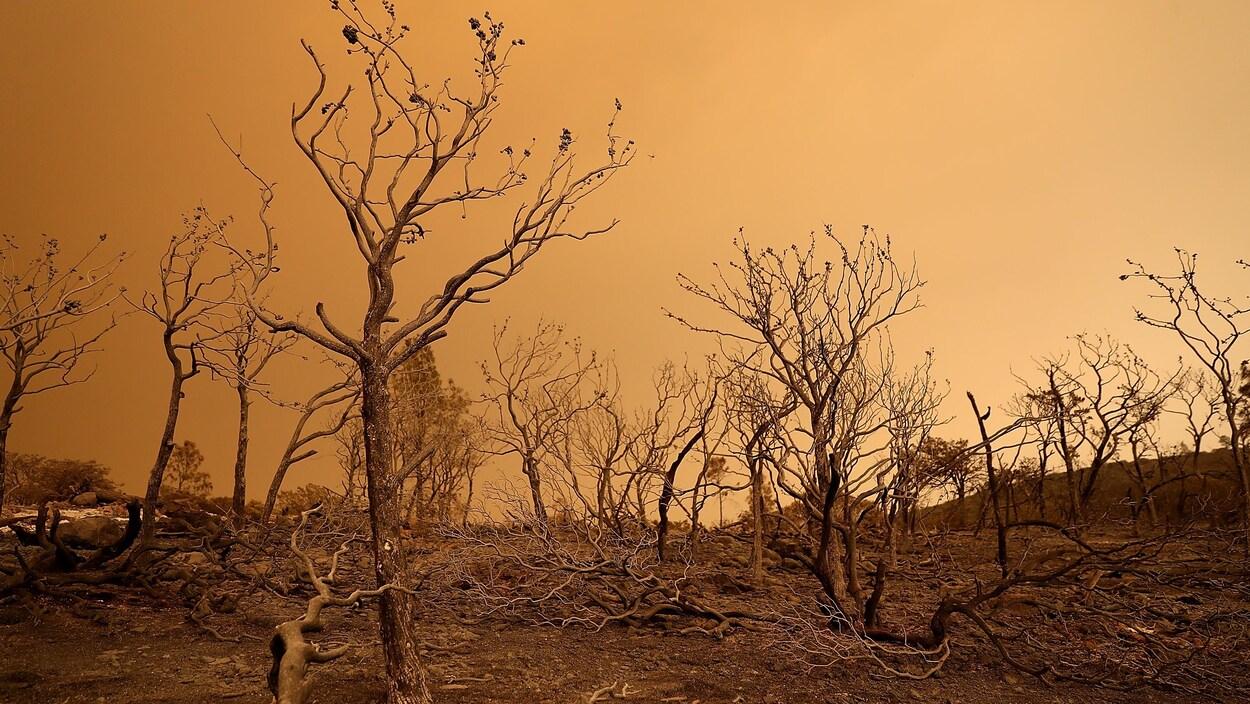 Des arbres brûlés par les flammes devant un épais couvert nuageux jaunâtre