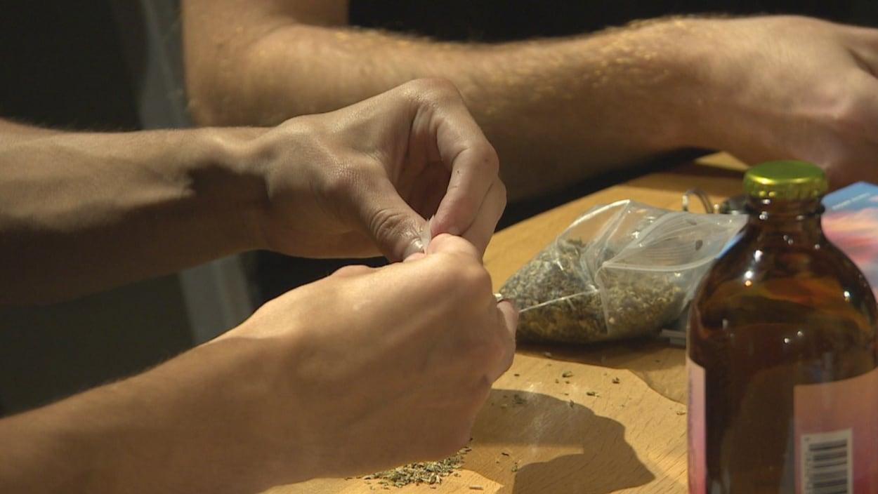 Des mains roulent un joint d'herbe à chat, qui ressemble à du cannabis.