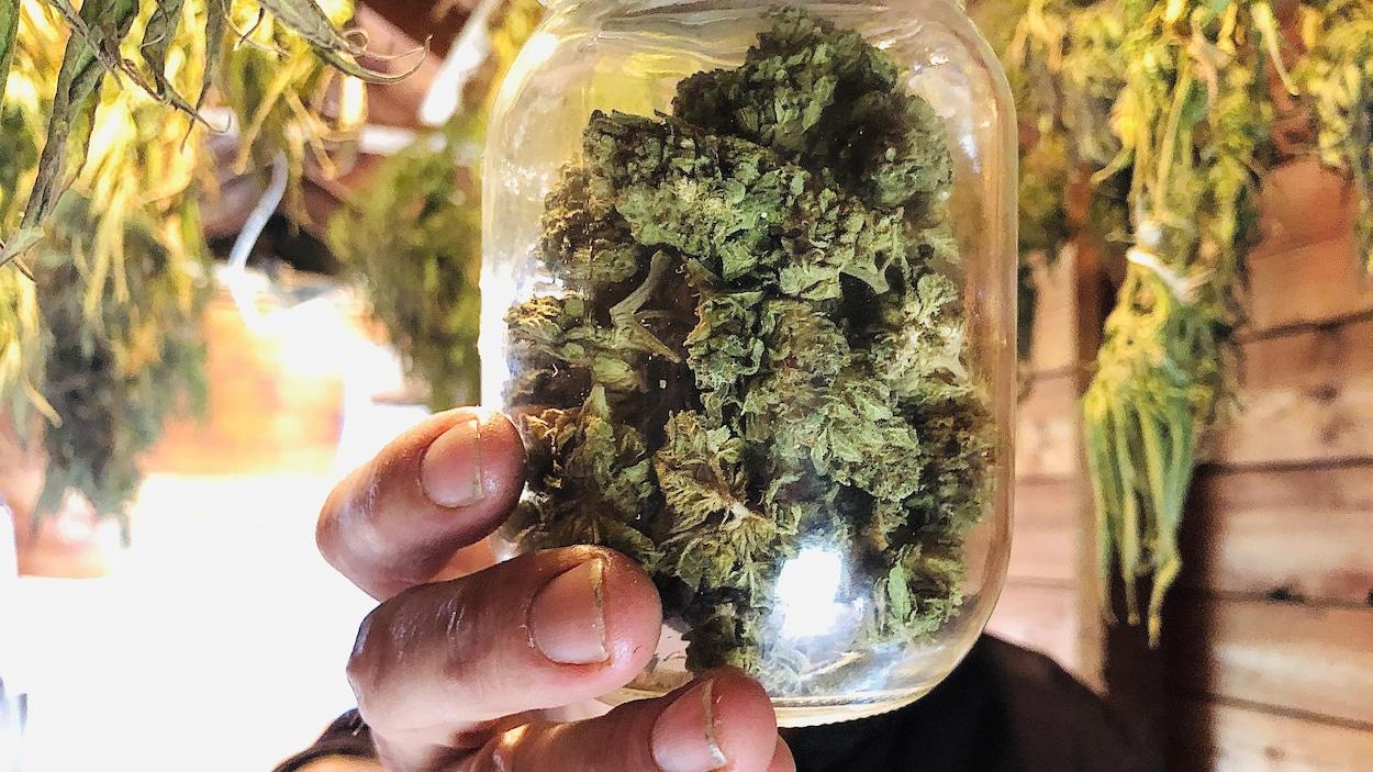 Selon les plus récentes données de Statistique Canada, 61% des Canadiens continue d'acheter ou consommer du cannabis illégal.