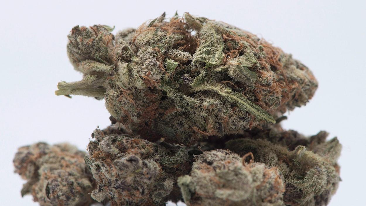 Des feuilles séchées de marijuana.