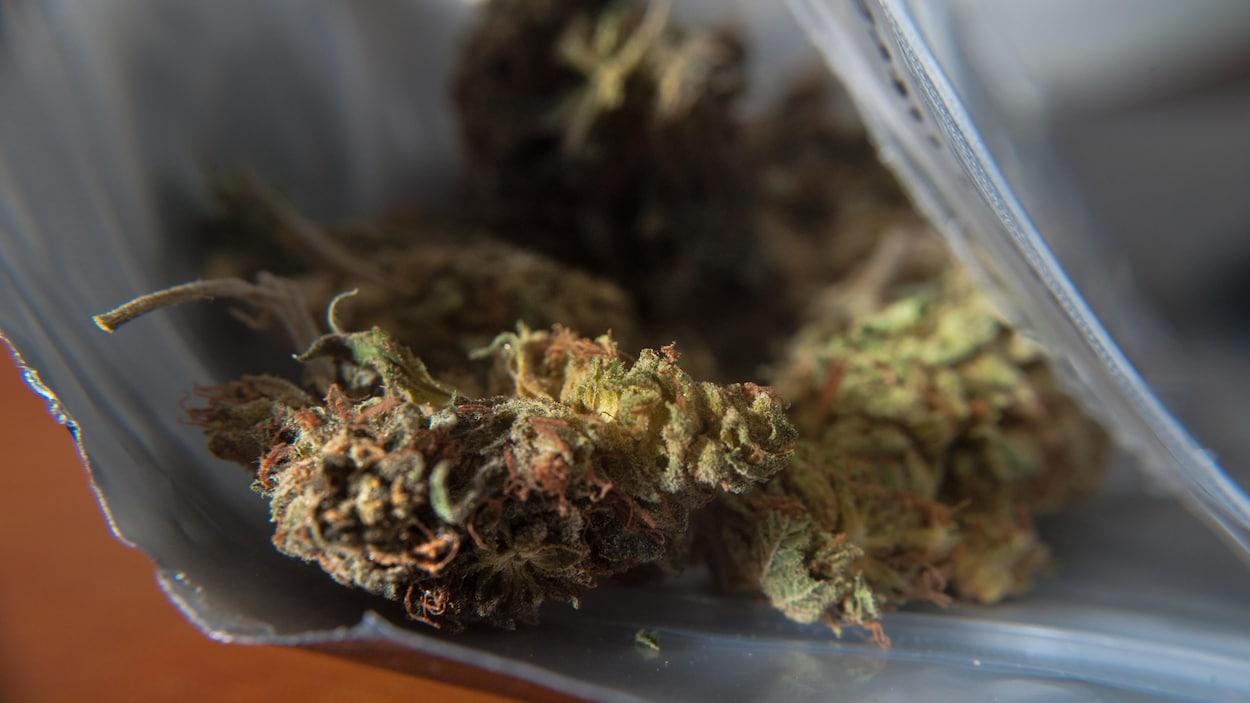 Du cannabis