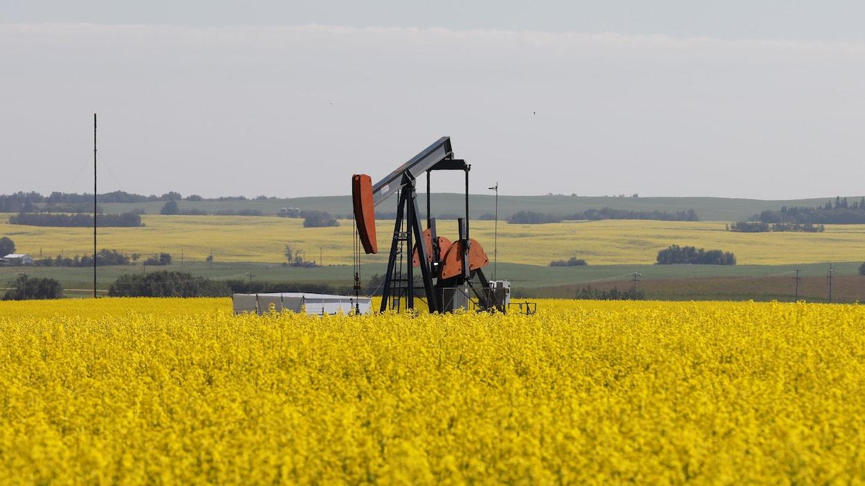 Un puits de pétrole au milieu d'un champ de canola.