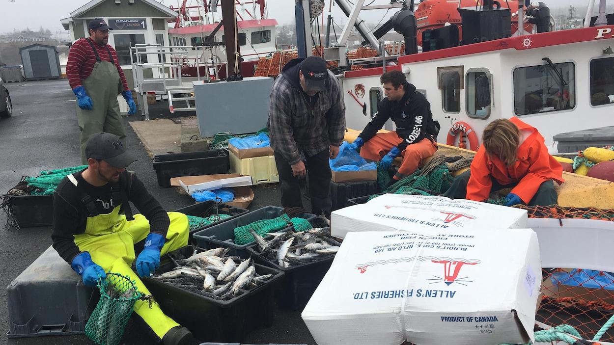 Des pêcheurs sur un quai préparent des appâts pour le crabe.