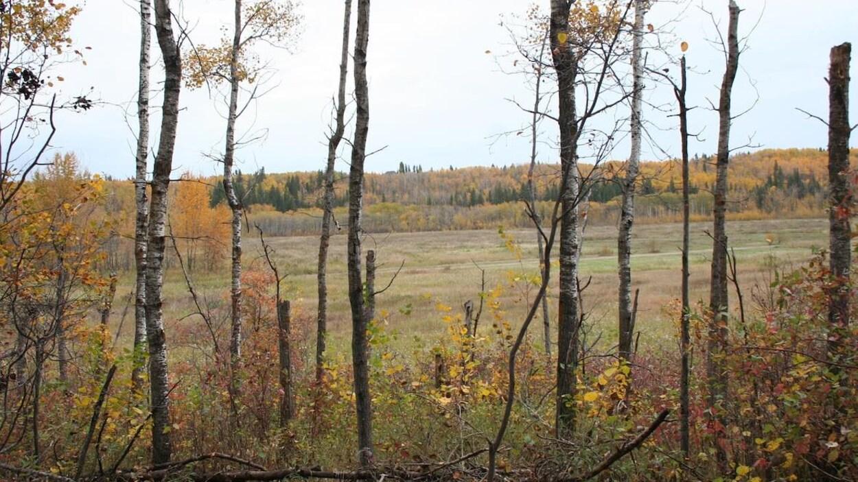 Un terrain avec quelques arbres.