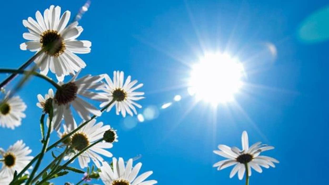 Le soleil brille dans le ciel.