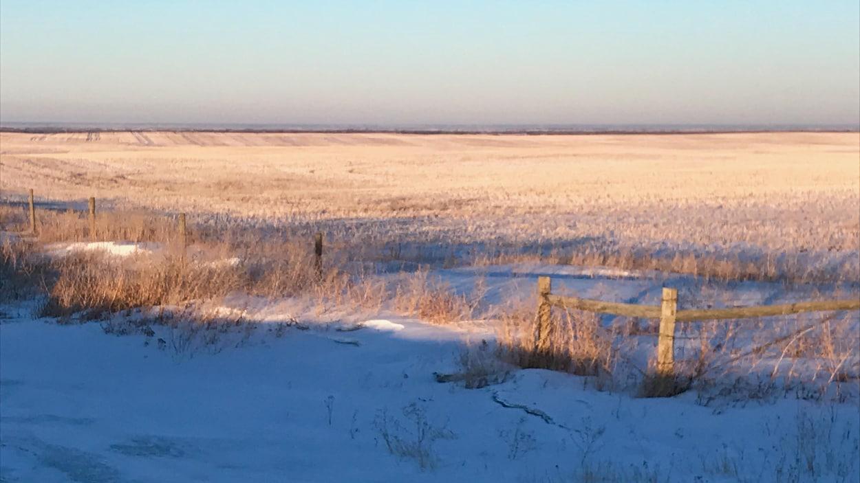 Un champ en Saskatchewan pendant l'hiver.