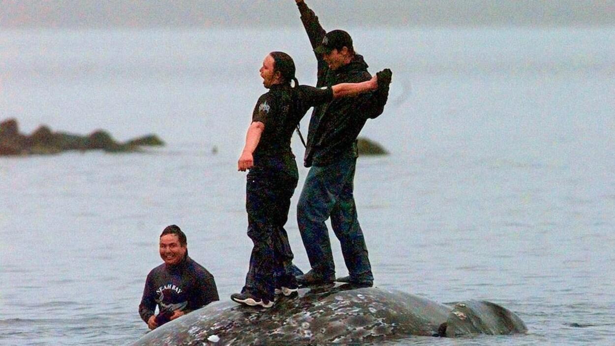 Des baleiniers Makah se tiennent sur la carcasse d'une baleine grise morte.