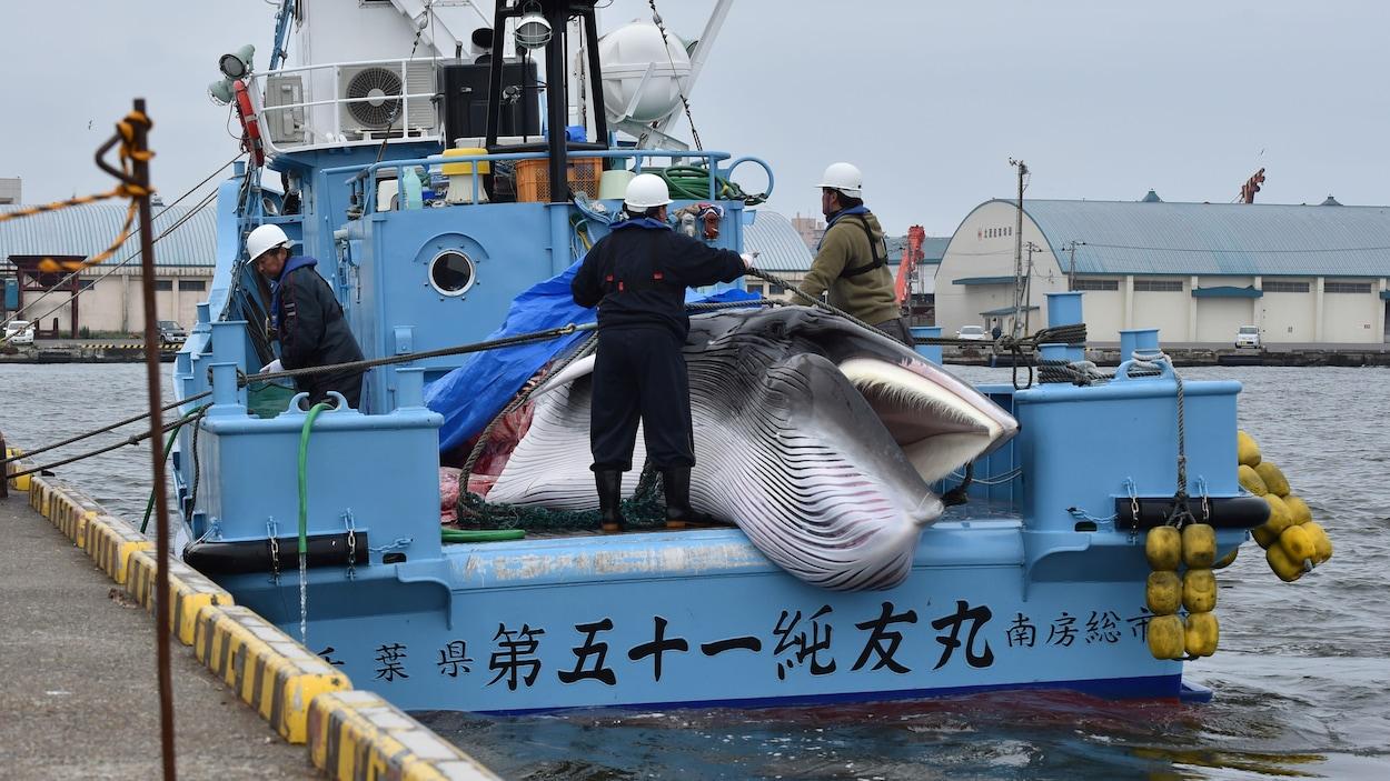 La baleine gît sur un bateau, entourée de trois pêcheurs.