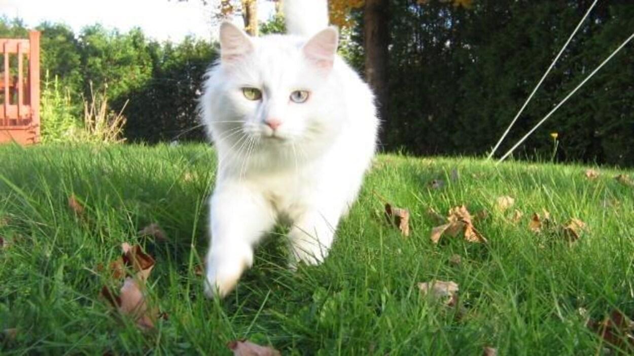 Un chat à l'extérieur
