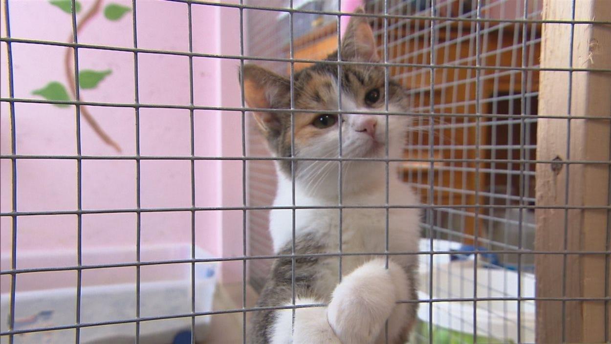 Un chat met sa patte dans le grillage d'une cage.